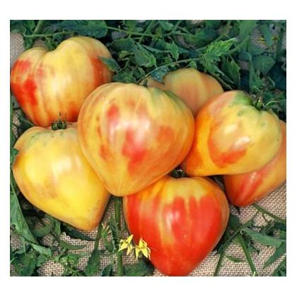 Rajče oranžové - prodej semen rajčat - 6 ks