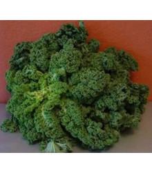 Kadeřávek zelený zimní - semena - 0,5 g
