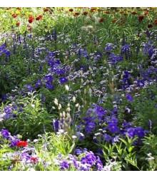Letničky - Zahradní sen v modrém směs - semena - 0,9 g