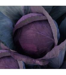 zelí hlávkové červené - Brassica oleracea convar. capitata var. rubra