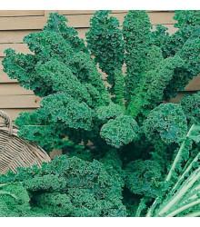 Kadeřávek zelený - semena - 0,9 g