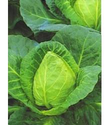Zelí bílé velmi rané - Brassica oleracea - semena - 0,8 gr