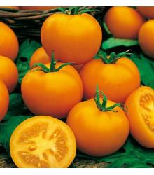 Rajče Zlatá královna - Lycopersicon lycopersicum - semena rajčat - 10 ks