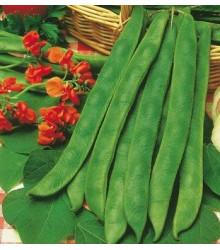 Fazol šarlatový pnoucí - Phaseolus vulgaris - semena - 15 ks