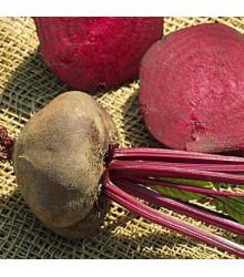 Řepa salátová tmavě červená - Beta vulgaris L. - semena - 1 g