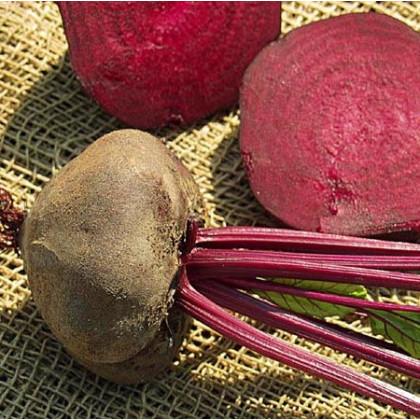 Řepa salátová tmavě červená - semena řepy - 1 gr