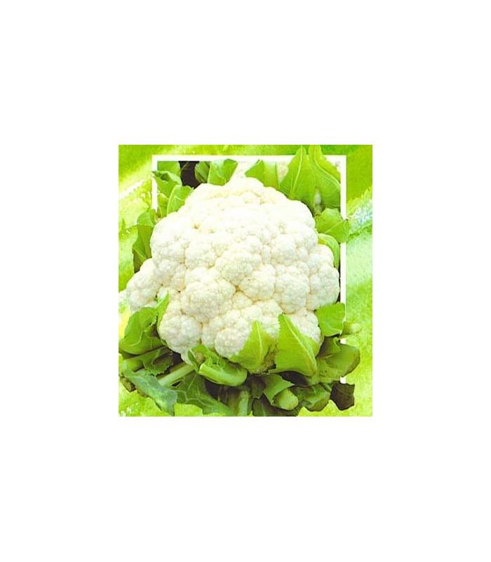 Květák polopozdní Brilant - prodej semen květáku - 0,5 gr