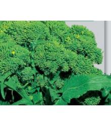 Brokolice Cezar - Brassica oleracea - semena - 0,6 gr