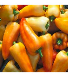 Paprika maďarská Feher - Capsicum annuum - semena - 20 ks