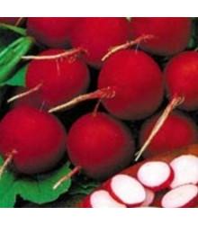 Ředkvička červená raná - prodej semen ředkvičky - 0,5 gr