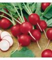 BIO Ředkvička růžová raná - semena ředkvičky - 0,3 g