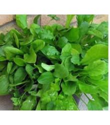 Mix provensálského salátu - Lactuca sativa - semena - 0,1 gr