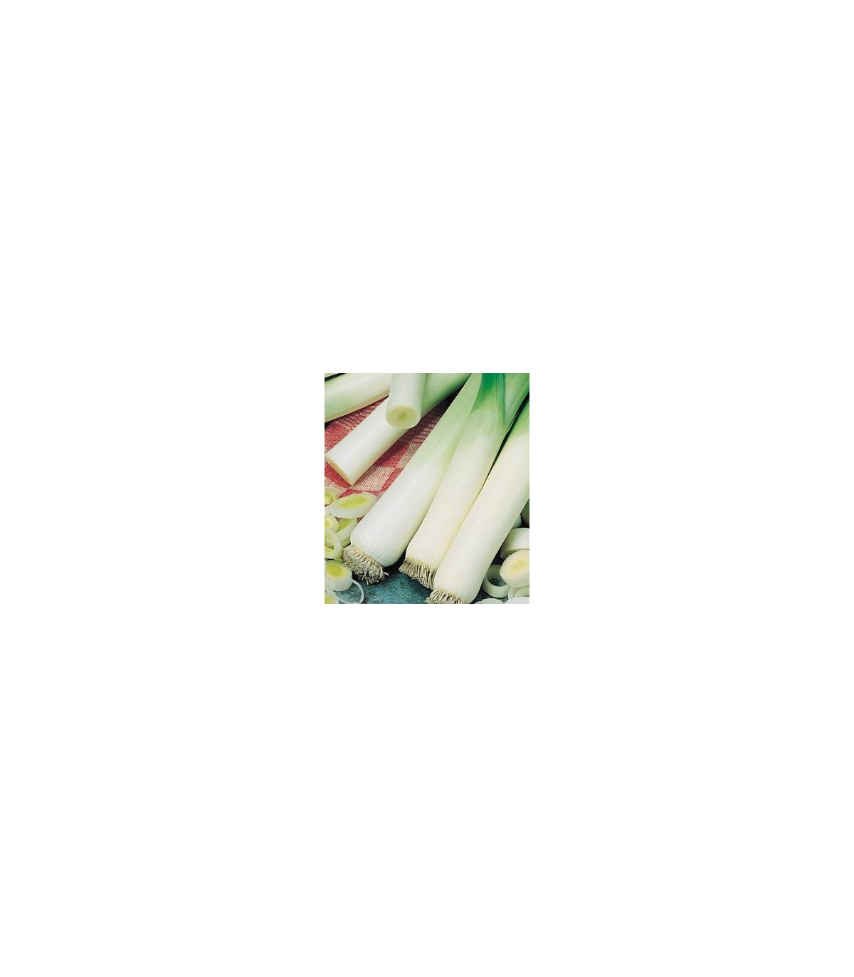 Pór - pórek zimní Natan - osivo pórku - rostlina Allium porrum - 1,5 gr