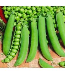 More about Hrách cukrový - Hendriks - Pisum sativum - semena - 12 gr