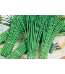 More about BIO osiva pažitky - Allium schoenoprasum L. - Paitka Polyfit - 0,5 gr