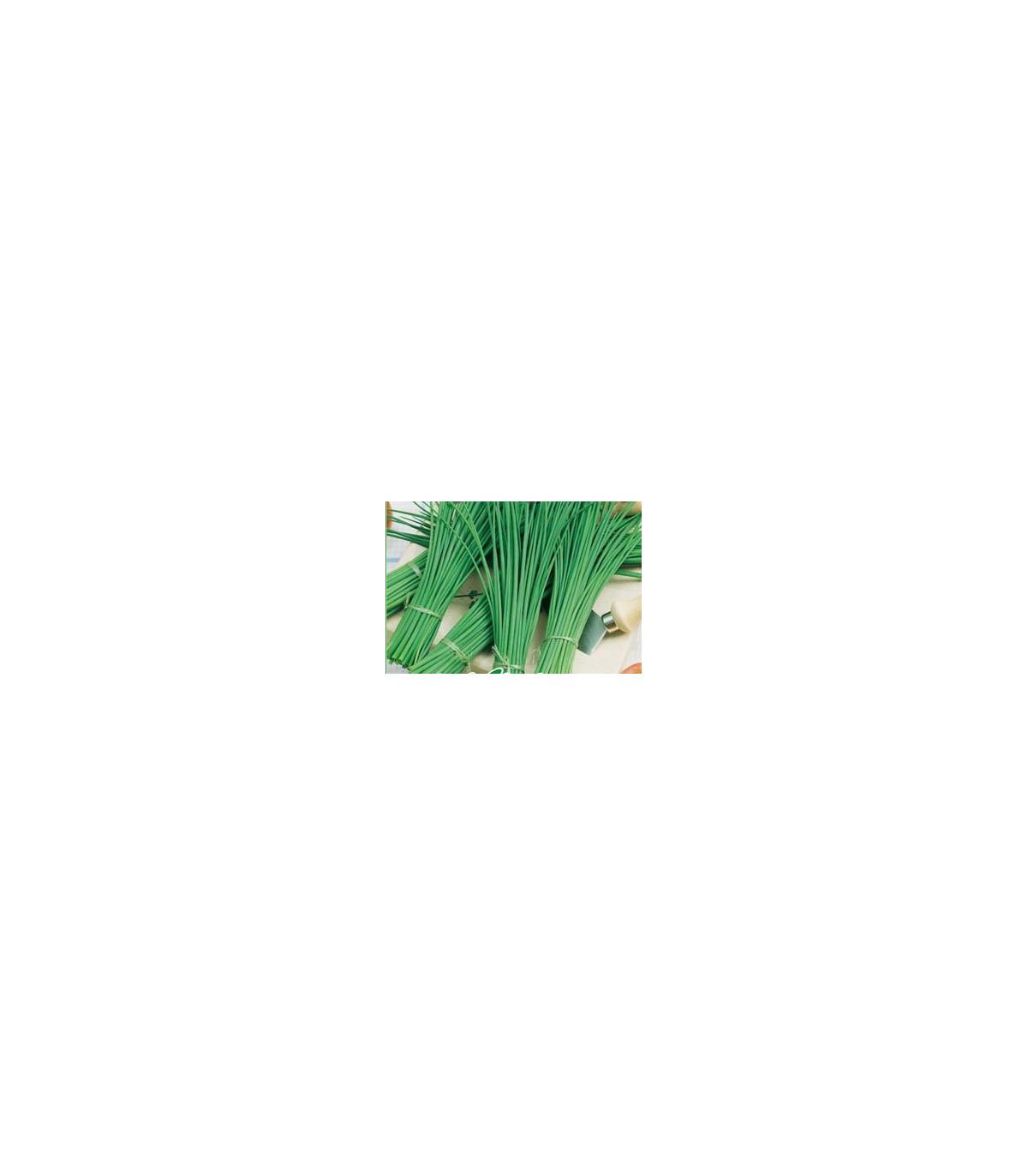 BIO Pažitka Polyfit - prodej bio semen pažitky - 0,5 gr