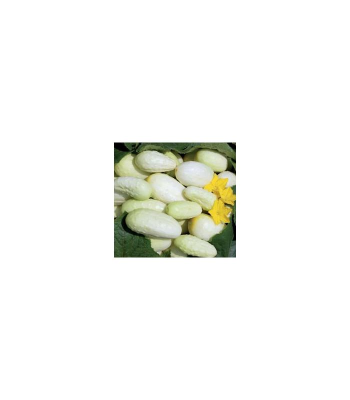 Okurka- bílá- semena- 5 ks