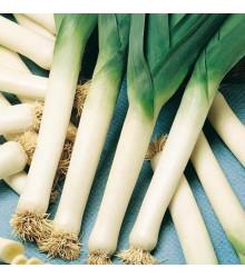 Pór bio kvalita Belton F1 - Allium porrum - semena - 10 ks