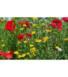 Aromatické byliny divoké - směs - semena - 0,2 g