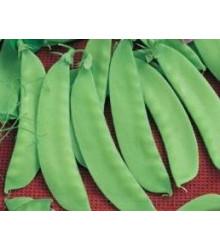 Hrách cukrový Jessy - Pisum sativum - semena - 20 gr