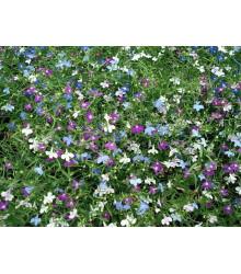 More about Lobelka drobná směs - Lobelia erinus - semena - 1000 ks