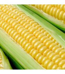 Kukuřice cukrová Tasty Sweet F1 - Zea Mays - semena - 16 ks
