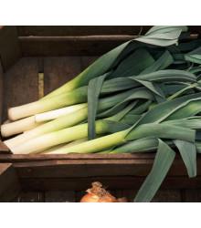 BIO Pór Megaton F1 - Allium porrum - bio semena - 10 ks