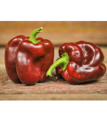 paprika setá Hnědá kráska - Capsicum annuum Hnědá kráska