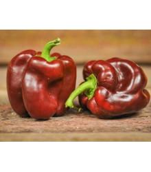 Paprika Hnědá Kráska - Capsicum annuum - semena - 9 ks