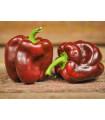 Paprika hnědá - Hnědá Kráska - Capsicum annuum - semena - 9 ks