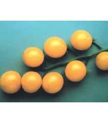 Rajče Sladké zlato - Solanum lycopersicum - semena - 7 ks
