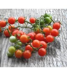 Divoká rajčátka - Solanum pimpinellifolium - semena - 6 ks