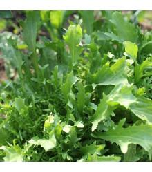 Mizuna Kruis F1-japonská hořčice - Brassica campestris Japonica - semena - 0,02 g