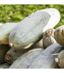 Tykev Blue Banana - Cucurbita maxima - semena tykve - 5 ks