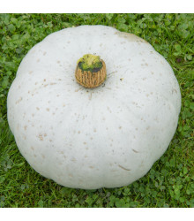 Tykev Crown Prince F1 - Cucurbita maxima - semena tykve - 5 ks