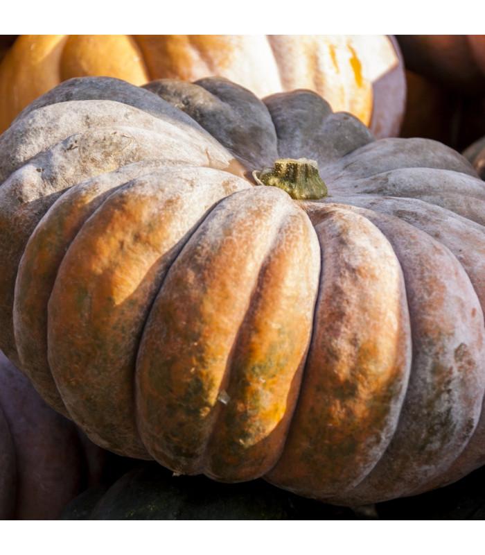 BIO dýně muškátová Musquee de Provence - prodej bio osiva dýně - 5 ks