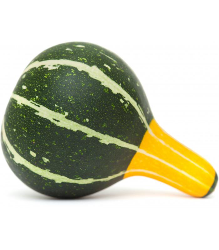 Tykev okrasná - Cucurbita pepo - semena - 10 ks