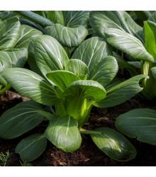 Pak Choi Hanakan F1 - Brassica rapa var rosularis - semena - 70 ks