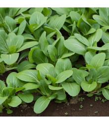 Zelená hořčice Komatsuna - Brassica rapa var. komatsuna - semena - 20 ks