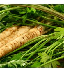 Pastiňák setý Mitra - Pastinaca sativa - semena - 1 g