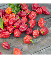 More about Chilli Trinidad - Capsicum chinense - semena - 6 ks