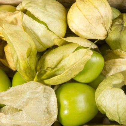 Tomatillo - Rajčenka - Physalis ixocarpa - semena - 5 ks