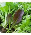 Mix aromatických salátů - semena - 0,1 g