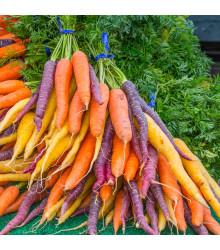 Mrkev letní Rainbow F1 - Daucus carota - semena - 50 ks