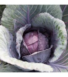 Zelí červené Pourovo polopozdní - Brassica pekinensis - semena - 200 ks