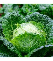 Kapusta hlávková Entira F1 - Brassica oleracea - semena - 40 Ks