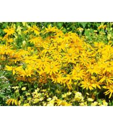 Letničky Zahradní sen ve žluté - směs letniček - semena - 0,9 g