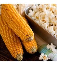 Kukuřice pukancová F1 Nana - Zea mays - semena - 15 ks