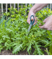 Roketa setá Dentelata - Eruca vesicaria - semena - 0,5 gr