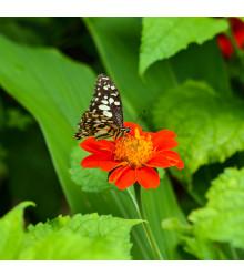 Květinová směs pro motýly - semena - 3 g